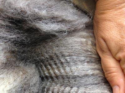 Maryland Wool