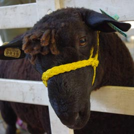 Maryland Sheep Breeders