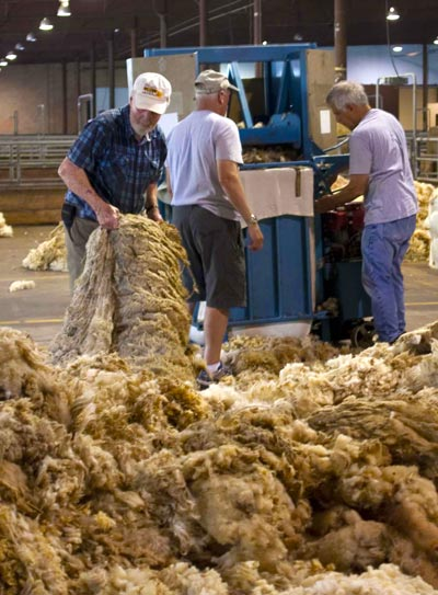 Sheep Breeders wool pools