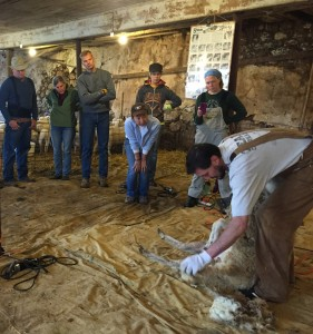 msba-shearing-school-demo