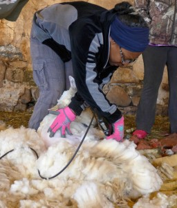 msba-shearing-school-student