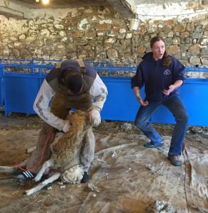 msba-shearing-school